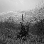 Tarn Hows Stump 1 B&W